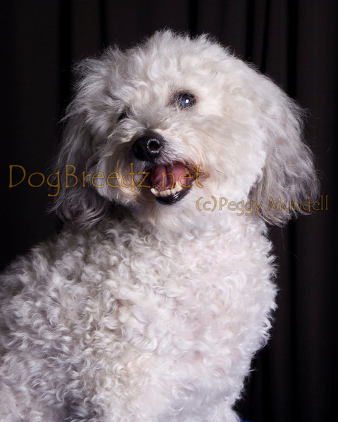 Dee O' Gee's Grooming - Sparky Boccanfuso