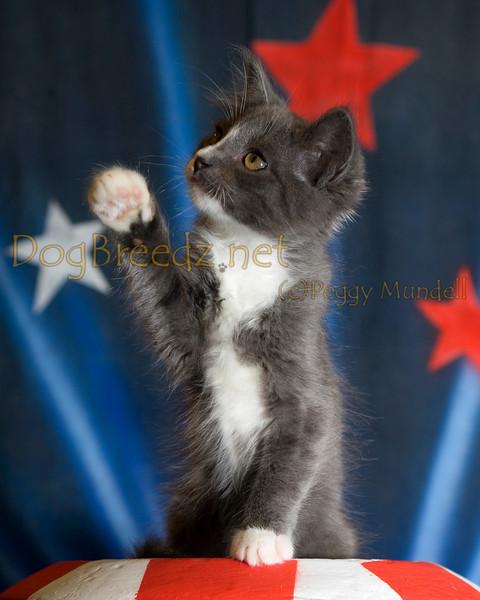 The Pet House - Foster Kitty #3