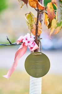 9   SGI Cherry Tree Dedication Loring Park MN  10-2-2020