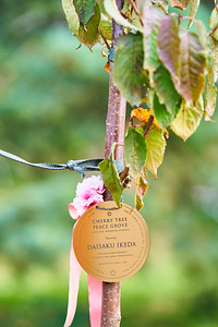 11   SGI Cherry Tree Dedication Loring Park MN  10-2-2020