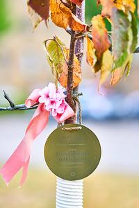 10   SGI Cherry Tree Dedication Loring Park MN  10-2-2020