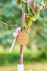 17   SGI Cherry Tree Dedication Loring Park MN  10-2-2020