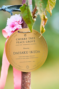 12   SGI Cherry Tree Dedication Loring Park MN  10-2-2020