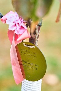 3   SGI Cherry Tree Dedication Loring Park MN  10-2-2020