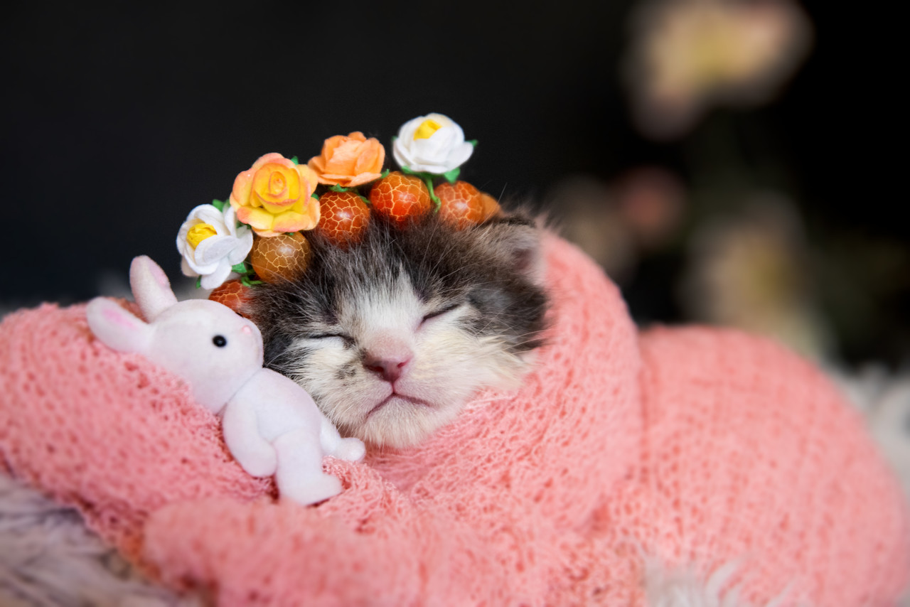 kitten wrapped in coral pink blanket, resting its head on a tiny toy bunny, wearing a crown of gemstone beads and flowers
