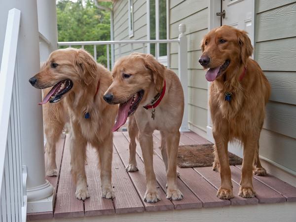 Landry, Gunnar and Maggie