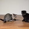 J kittens