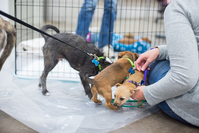 Safe Hands Adoptable Dogs