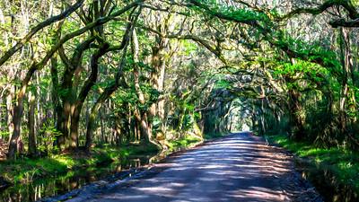 Shaded Road