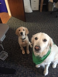 Ruger and Annie