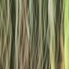 Bamboo Forest Swipe