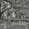 Old Trees; Spanish Moss; and Tombstones