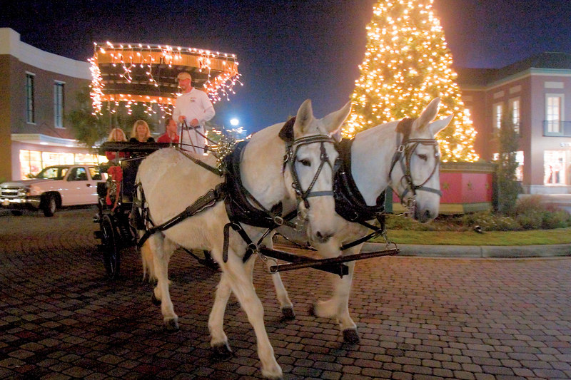 Town Center Mall<br /> Mount Pleasant, SC<br /> 12/23/2006<br /> <br /> Carriage Horses Go Suburban