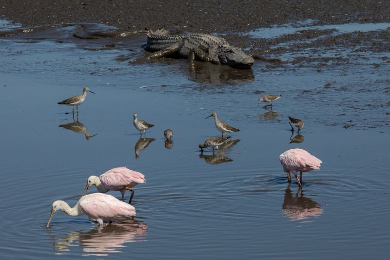 Wildlife in low-water pool at  Donnelly Wildlife Refuge (8,000 acres)