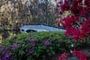 Magnolia Plantation Gardens near Charleston, SC