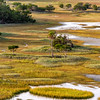 Kiawah Marshes and Creeks