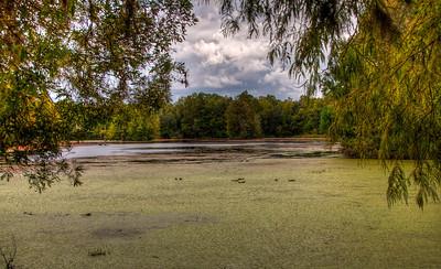 audubon-swamp-garden