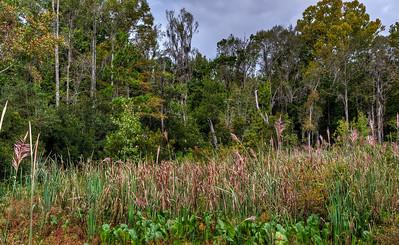 swamp-grasses
