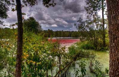 red-green-swamp-algae