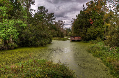 south-carolina-algae-swamp