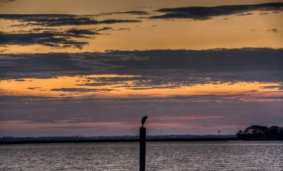cooper-river-bird-sunrise