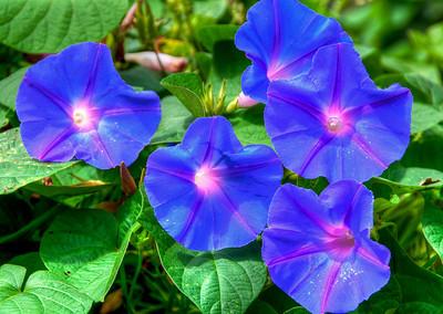 blue-purple-flowers