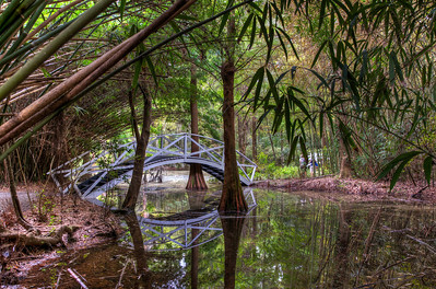 bamboo-bridge-swamp-hdr