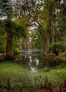 bridge-trees-swamp