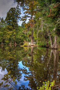 pond-trees-reflection