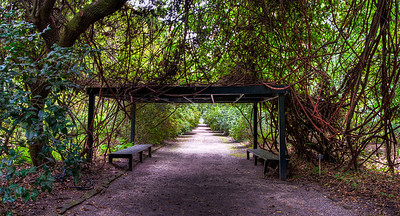 forest-canopy-path