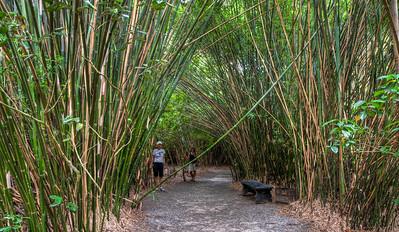 bamboo-women