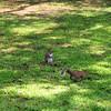 IMG_0034-1SquirrelsBatteryParkCharleston071312