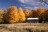Fall 2003 023 16x24