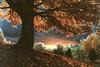 Frosty Autumn Dawn 20x30