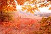 Maples & Sumac Red