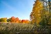 Maples Glory-5685