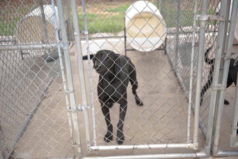 A trainee hound.
