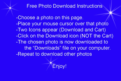 Free Downloads Instructions