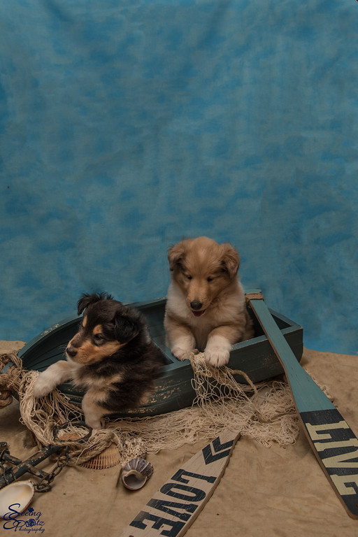 Charlie's Pups Week 5