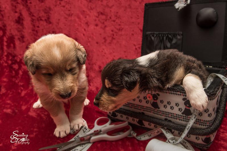 Charlie's Pups third Week