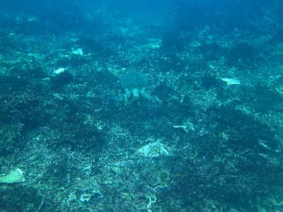 Thailand Okt. Nov. 2010