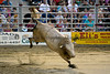 "The first bull out, already having dropped his rider, shows he can really buck.  Cowtown breeds its own bulls in their ""Born to Buck"" program."