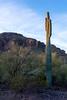 Picacho Peak State Park, Tucson AZ