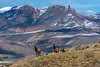 Elk, with the Absaroka Range as their backdrop.