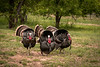 Triple Wild Turkey, neat.