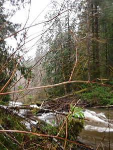 Another view of logjam