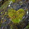 But it was not all without reward because - look, a mossy heart!