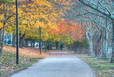 Path Chastain Park Fall Leaves