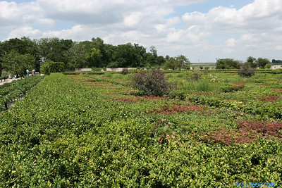 Jardins de Talcy 3 C-Mouton
