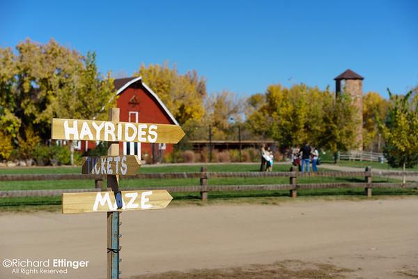 Chatfield Corn Maze 10.19.14